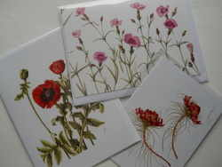 Botanical postcards