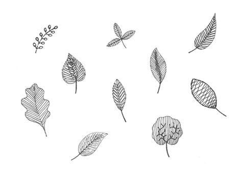 Leaves image
