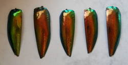 red/green beetle wings set of 5