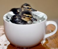 ducks in a cup