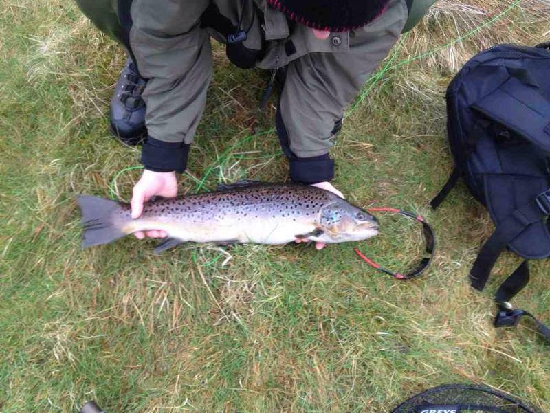 Stuart Rogans Brown Trout