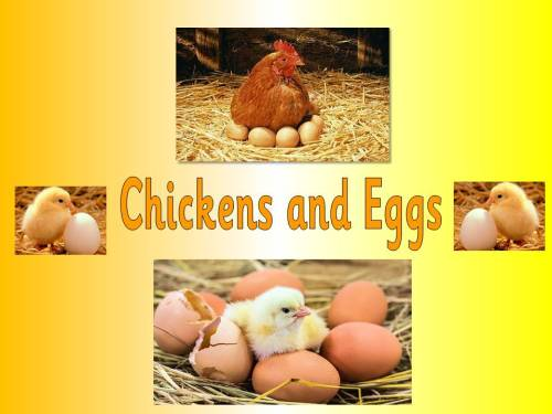 Life Cycles - Chickens and Eggs