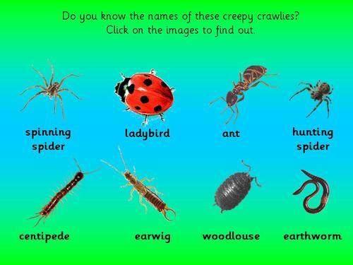 how to stop creepy crawlies
