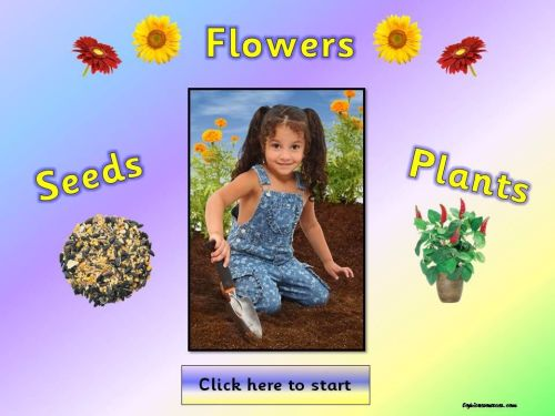 Plants, Flowers and Seeds Topic Pack