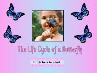 Life Cycles - Butterflies