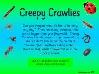Minibeasts - Creepy Crawlies Topic