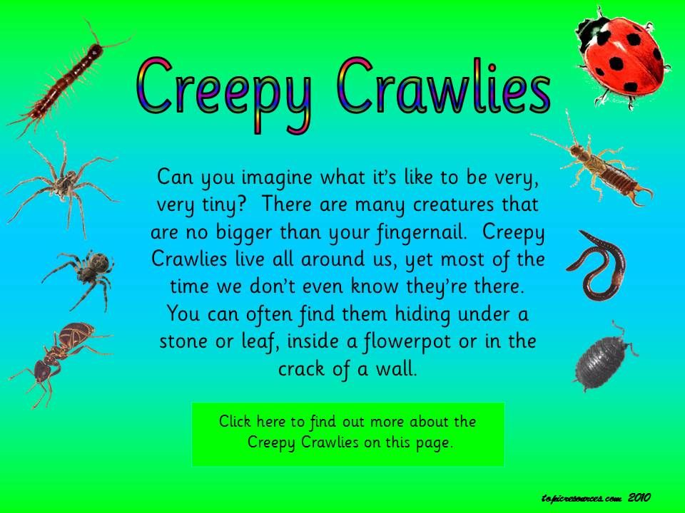 Minibeasts - Creepy Crawlies Topic