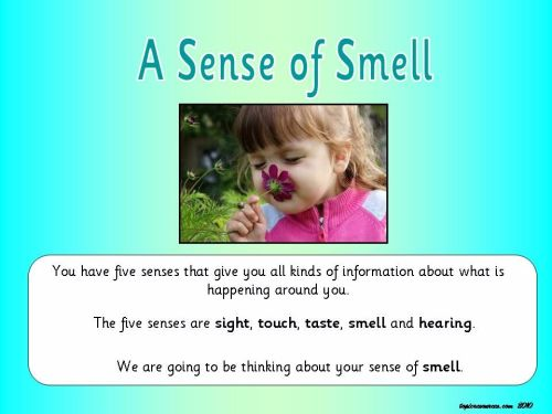 A Sense of Smell Topic