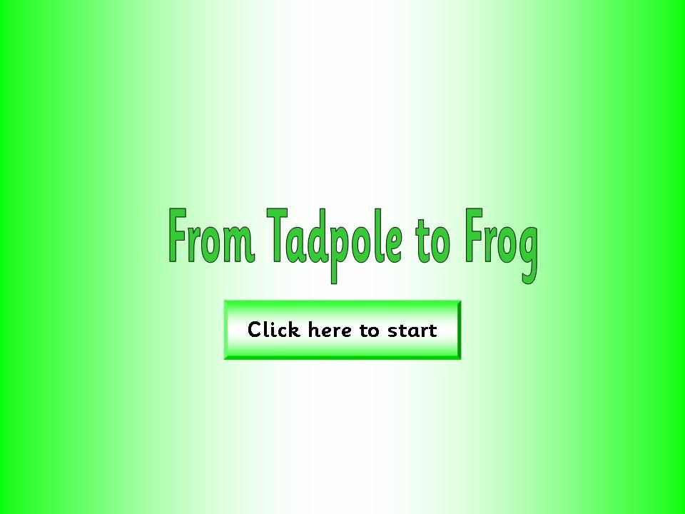 Life Cycles - Tadpoles and Frogs