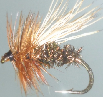 Peacock Caddis /DR 13