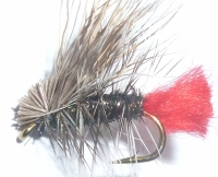 Hot Butt caddis - Peacock /DR 22