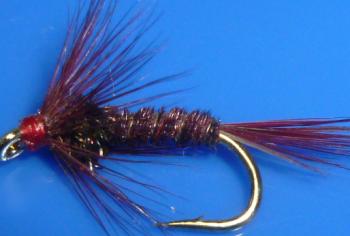 Cruncher,Claret wih Black Rib   #12 [CR16]