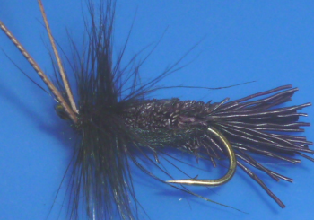 Goddard  caddis Black  /DR 49