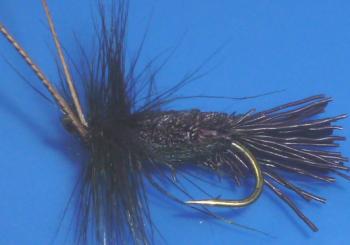 Goddard  caddis Black  /DR 49
