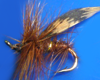 Brown Sedge /DR 55