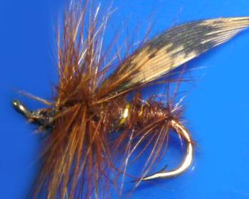 Brown Sedge /DR 55