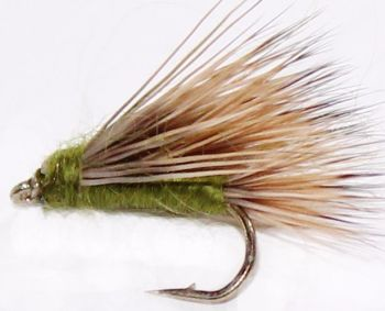 Sedge-hog,  Olive #14 [H10]