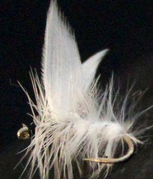 White Moth #14 /DR50