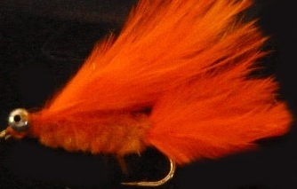 Cats whisker,Orange [CAT17]