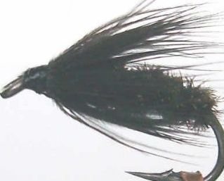black and peacock,wet fly