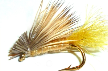 X  Caddis Tan  #12/DR 4