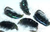 Shrimp - Black Pearlback  [SH1]