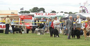 Lancashire Heelers, Cheshire County Show
