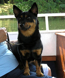 Lancashire Heelers, Buscuits on the Thames