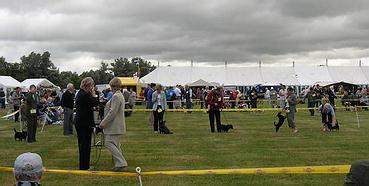 Lancashire Heelers, Open Dog