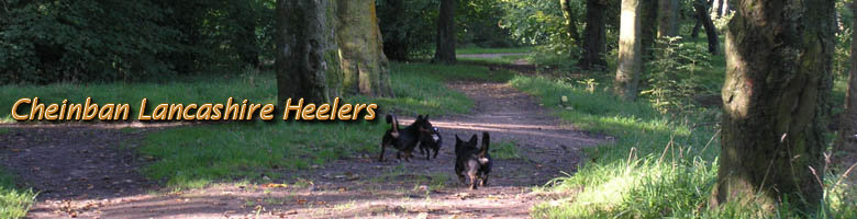 Cheinban Lancashire Heelers, site logo.
