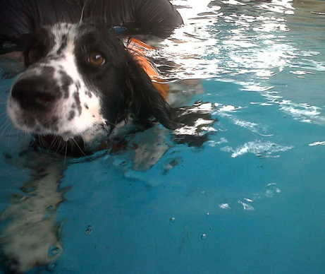 Bruce Swims