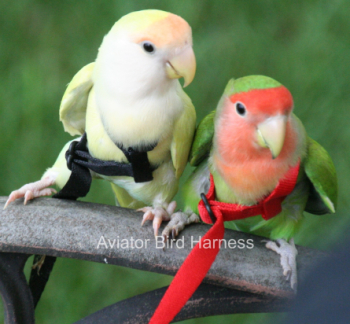 BIRD HARNESS (MINI)