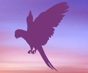 BIRD ITEMS