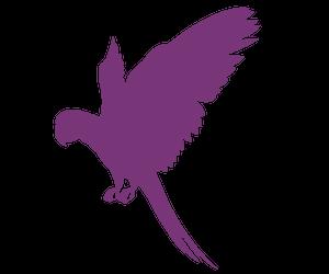 AVERAGE SIZED LOVEBIRDS