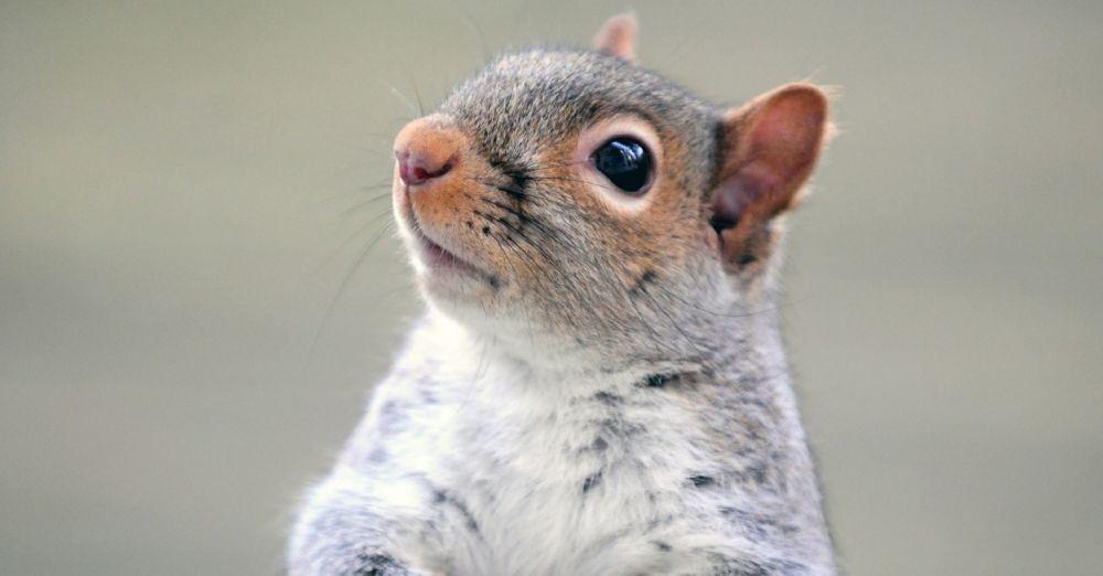 squirrel page