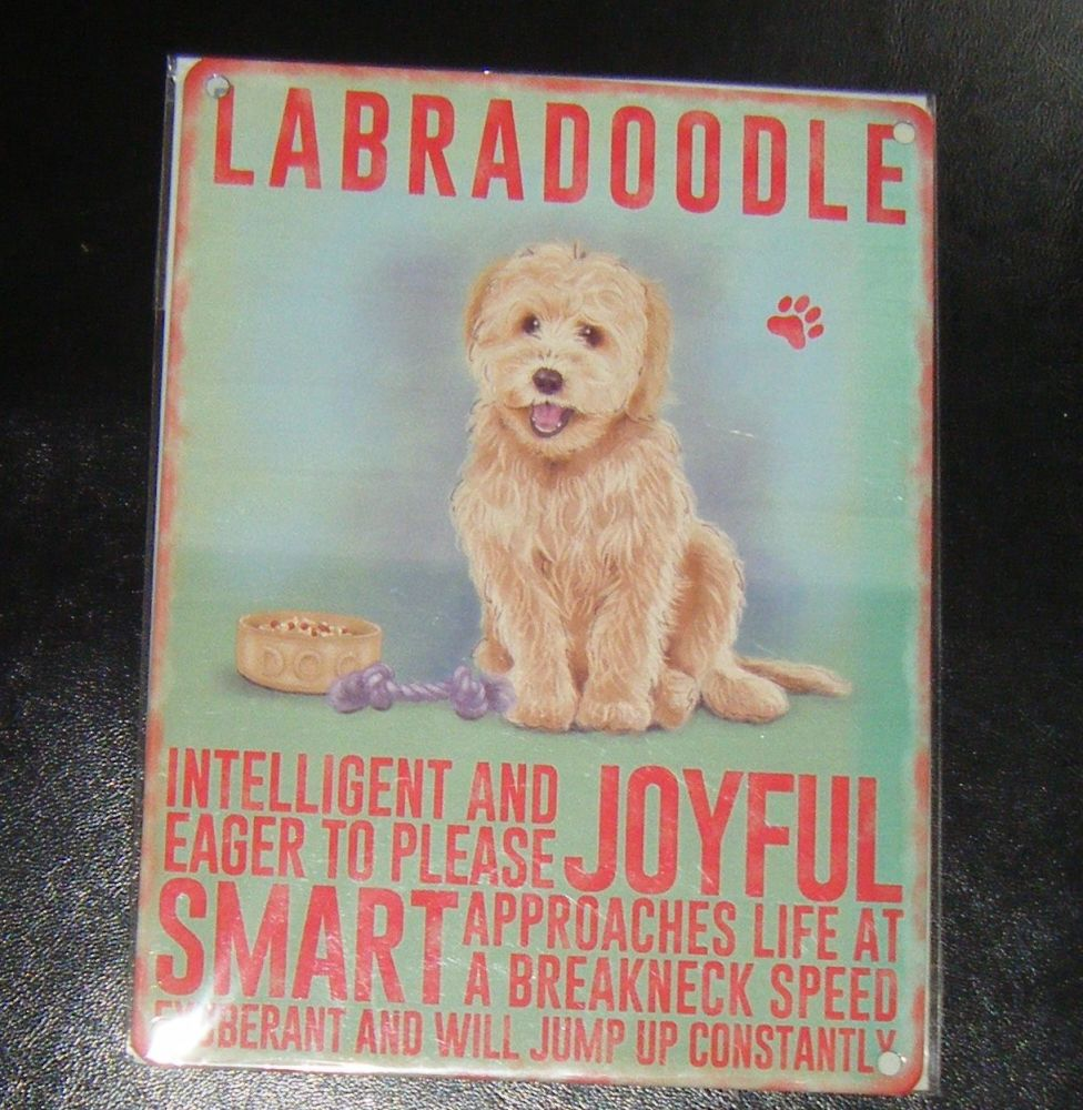 Labradoodle - Dog Breed Metal Wall Sign