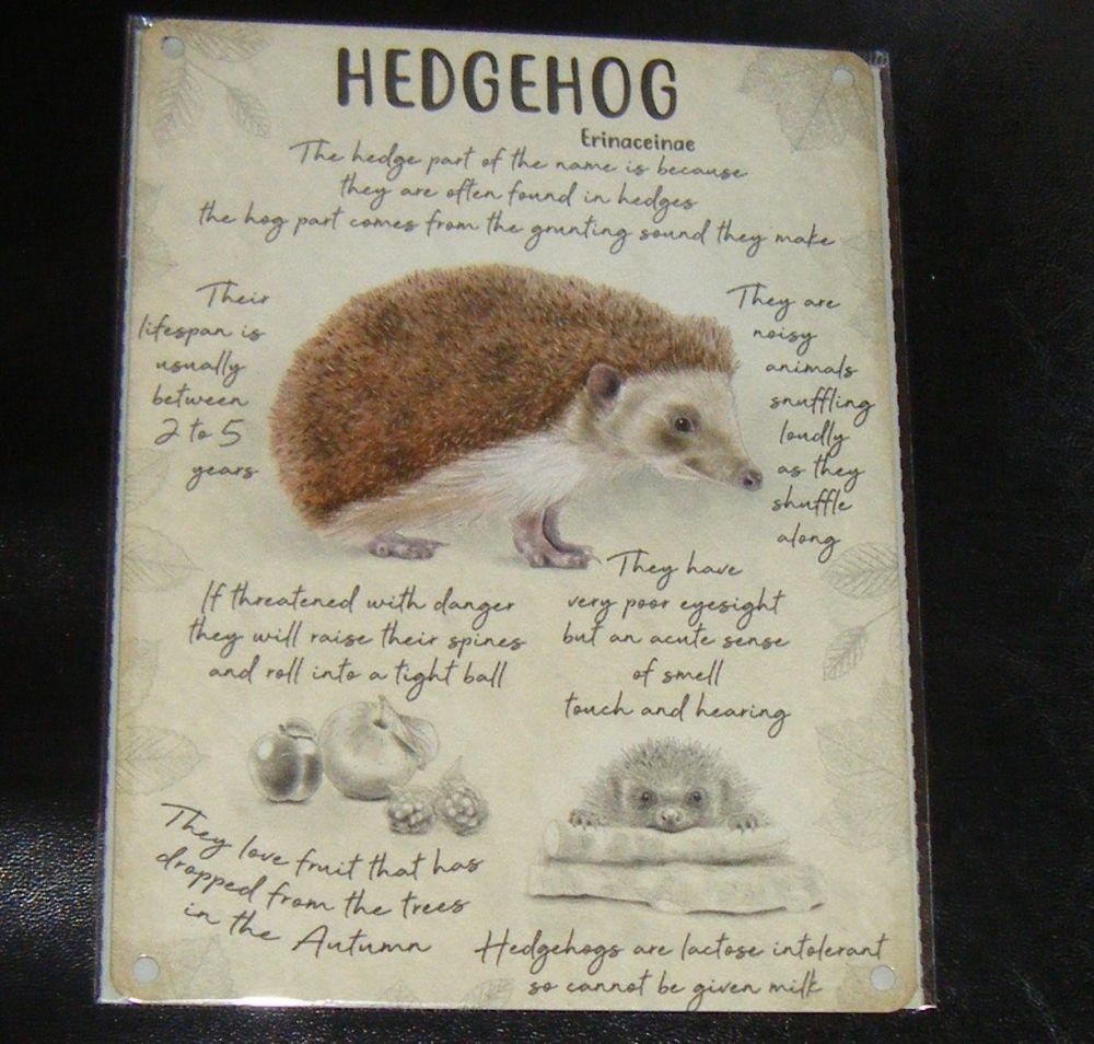 Hedgehog Info  - Animal Metal Wall Sign