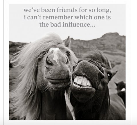 Bad Influence - Horse Greeting Card Blank Inside