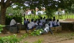 Class under tree - web