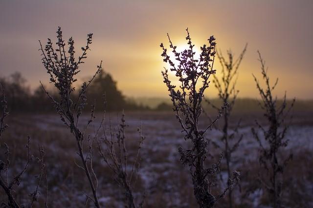 Winter Image 2