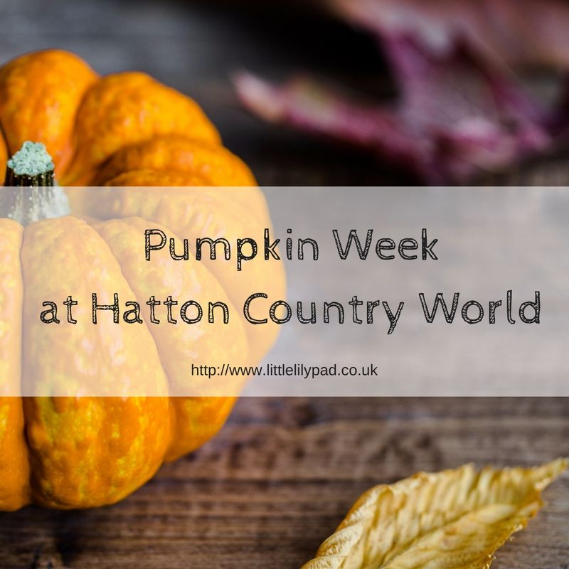 Pumpkin Week at Hatton Country World