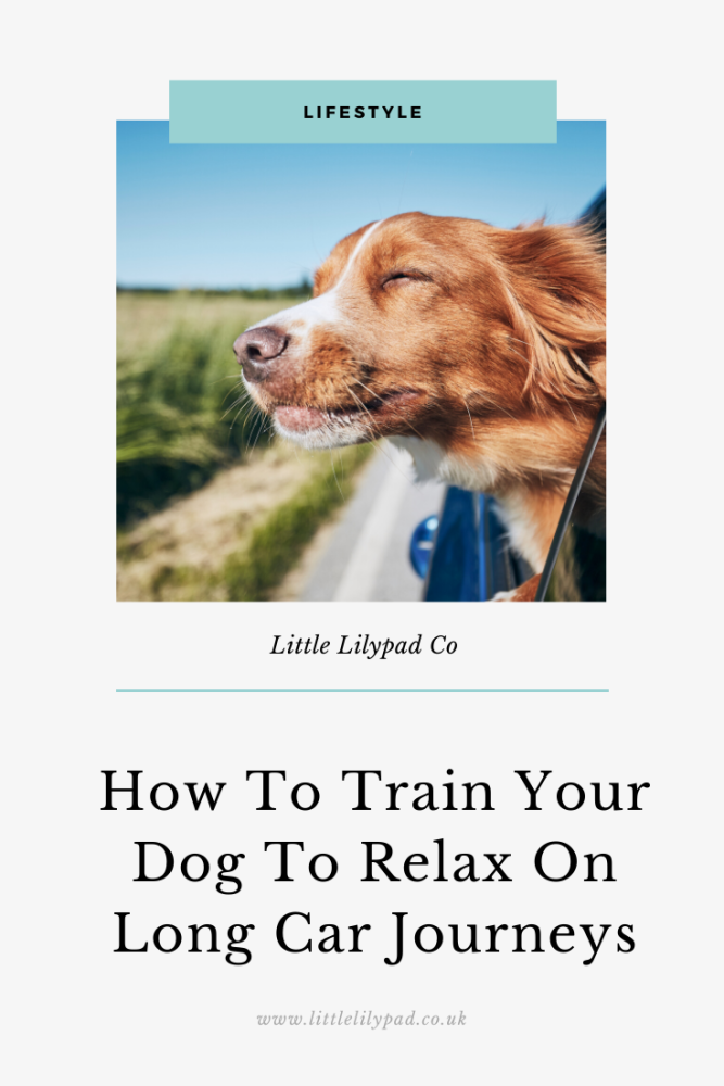 How to train your dog to relax on long car journeys