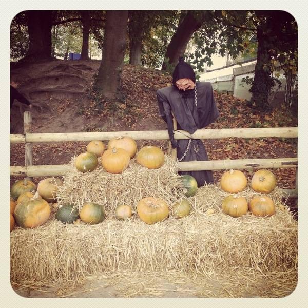 Pumpkin Week 1