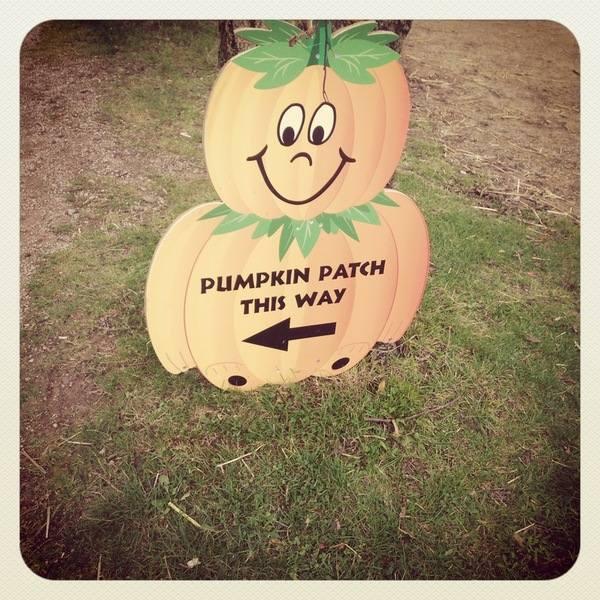 Pumpkin Week 4