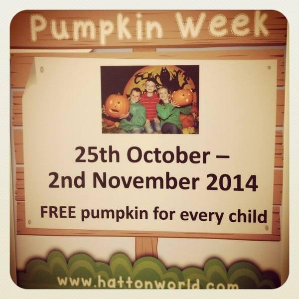 Pumpkin Week 7