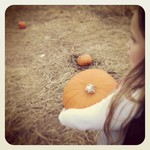 Pumpkin Week 8