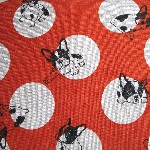 Japanese - French bulldogs playing on spots in red