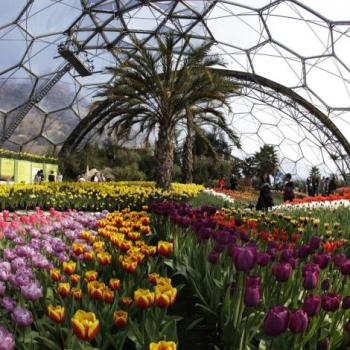 Eden Project Gift Membership