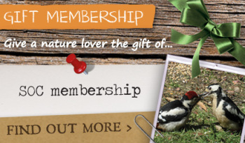 Give a gift membership to Scotland's Bird Club