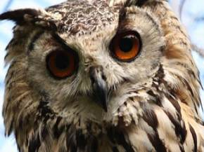 Give a membership to the World Owl Trust